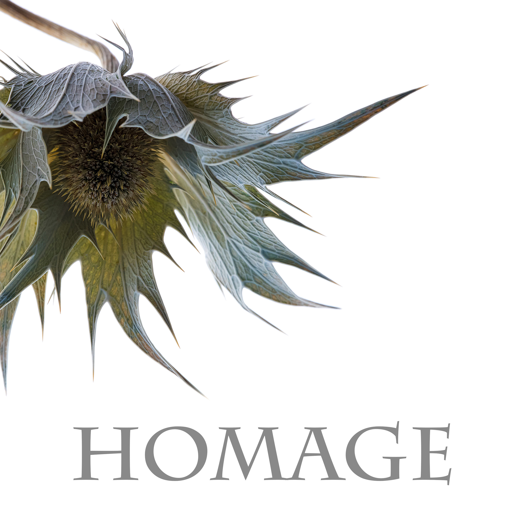 Silver-Homage_CattanachC_Book1.jpg