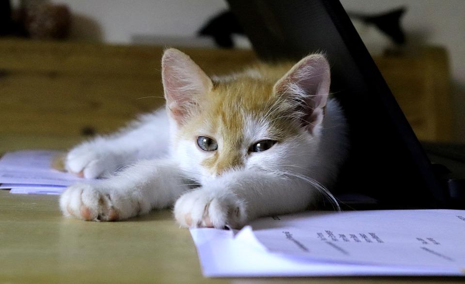cat-3599255_960_720.jpg