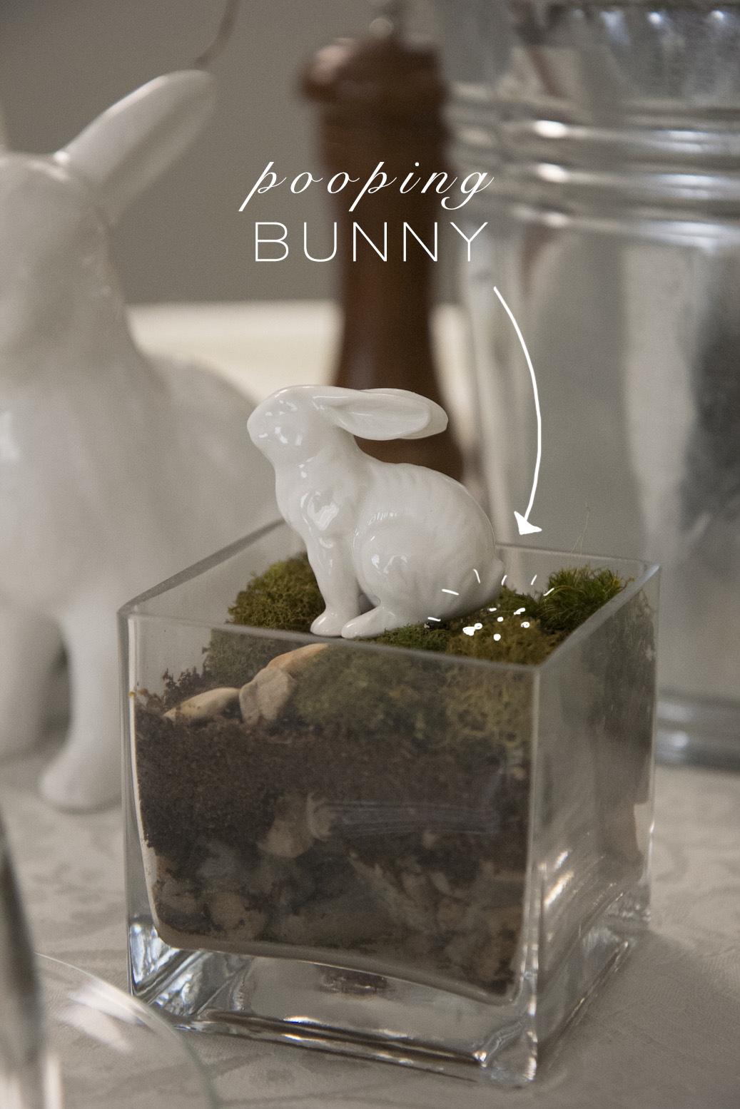 Pooping bunny