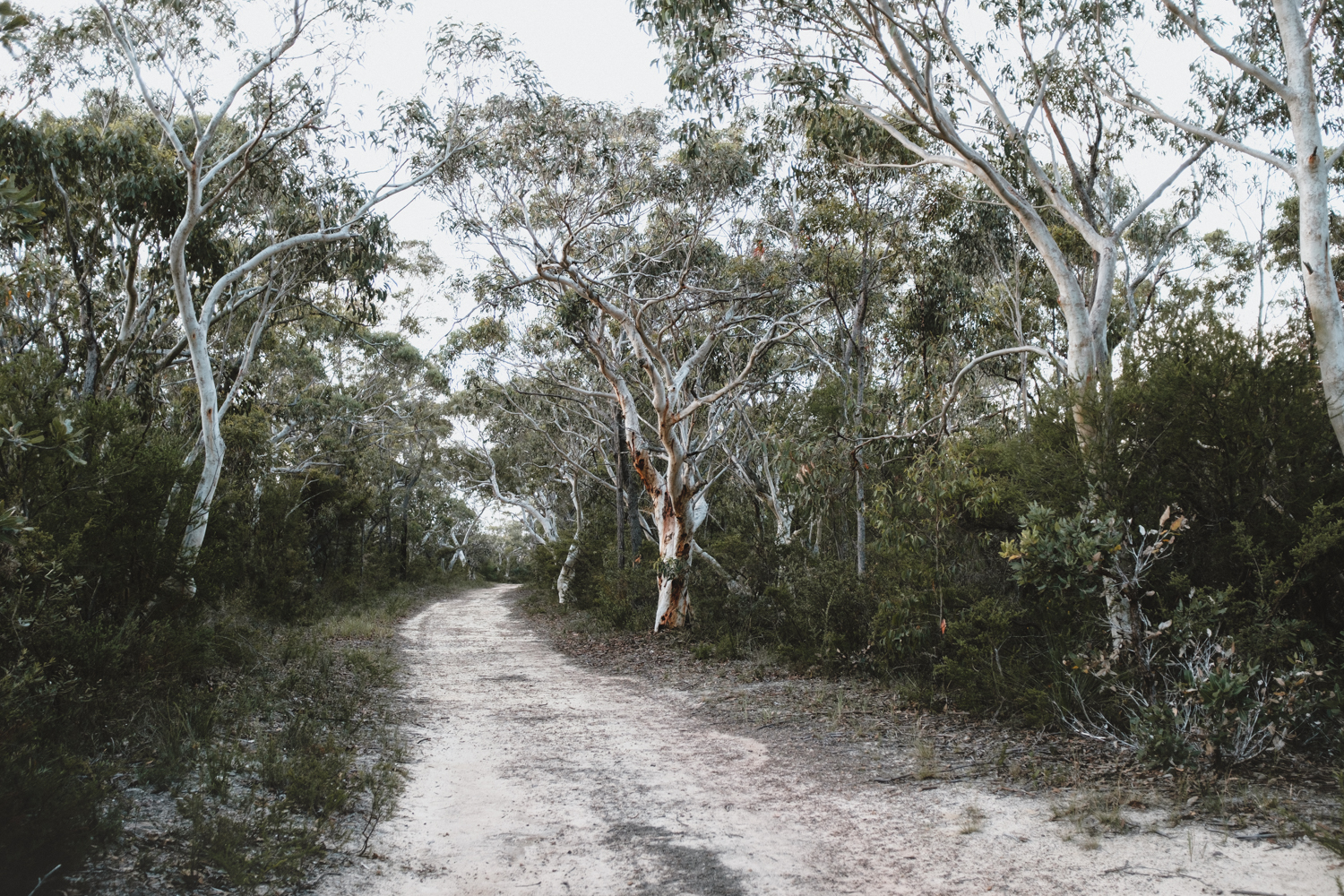 Quarry Road Track, Dural (A blog post by Rhonda.H.Y.Mason)