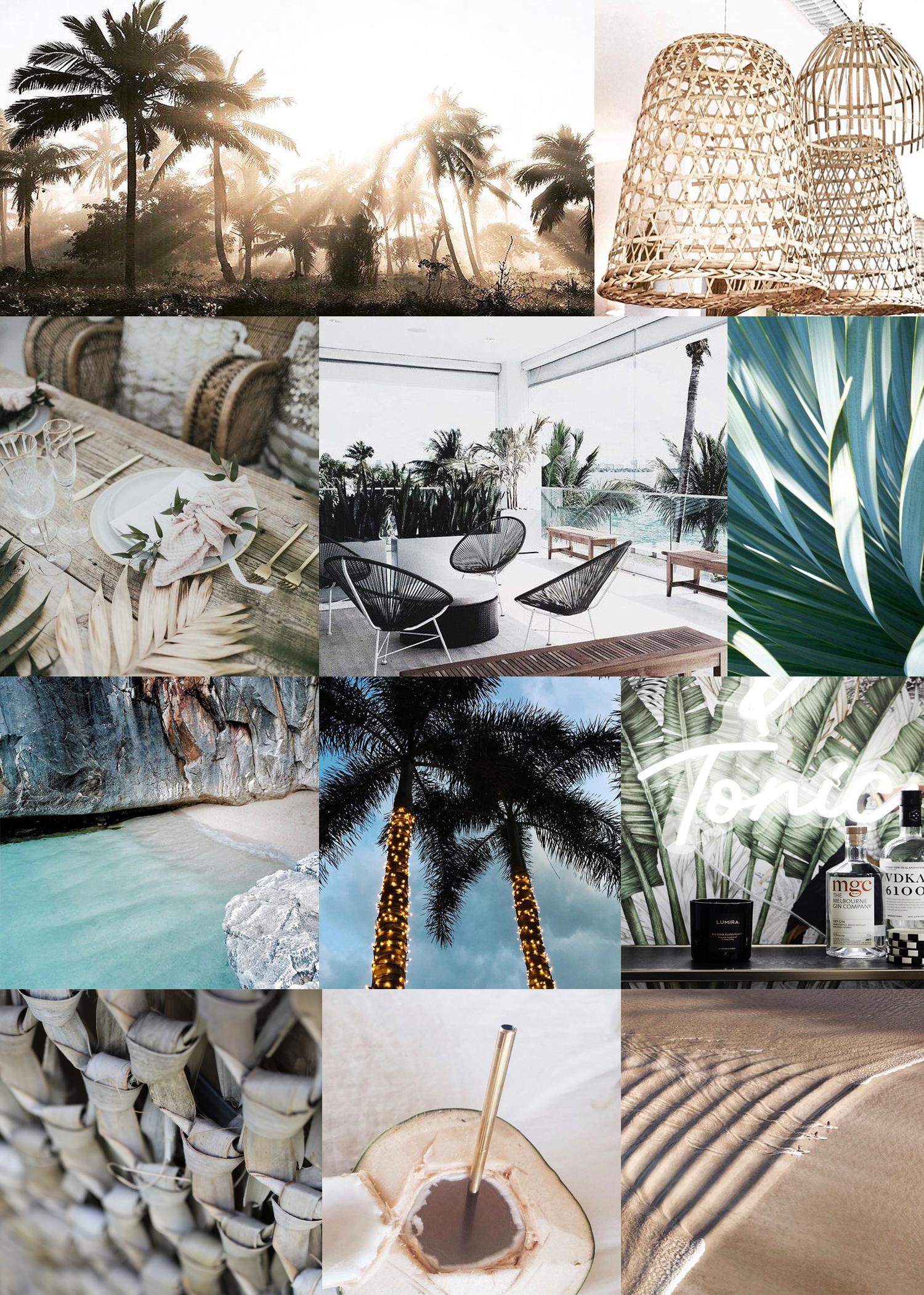 PALMS PARADISE.jpg