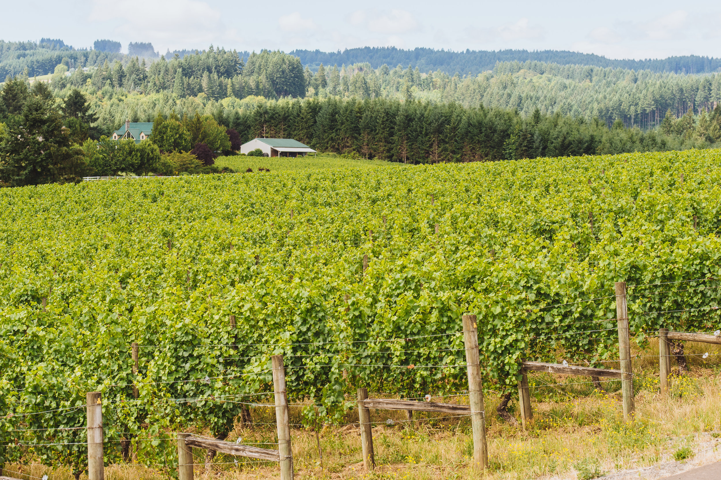 Ruby Vineyard July 2018-7.jpg