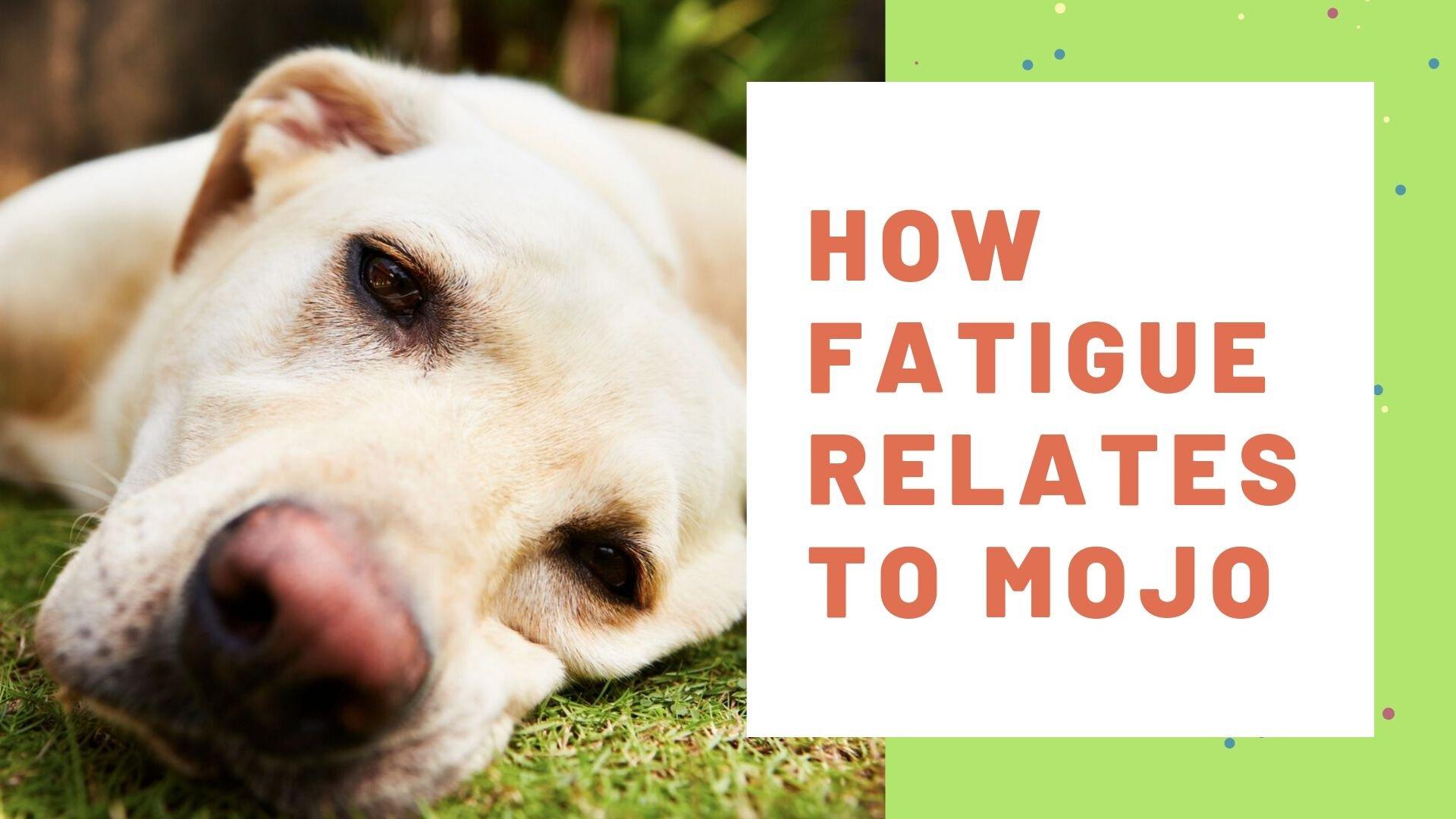 Fatigue and Mojo.jpg