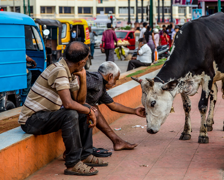 India-Pics-(7-of-1).jpg