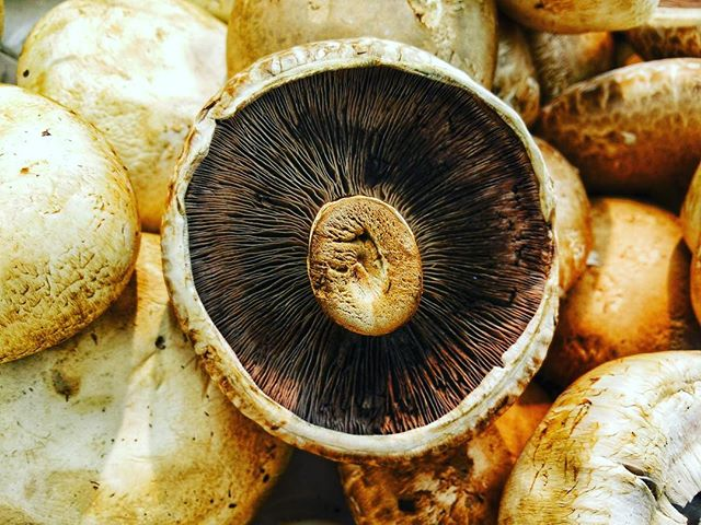 #mushrooms #plantbased