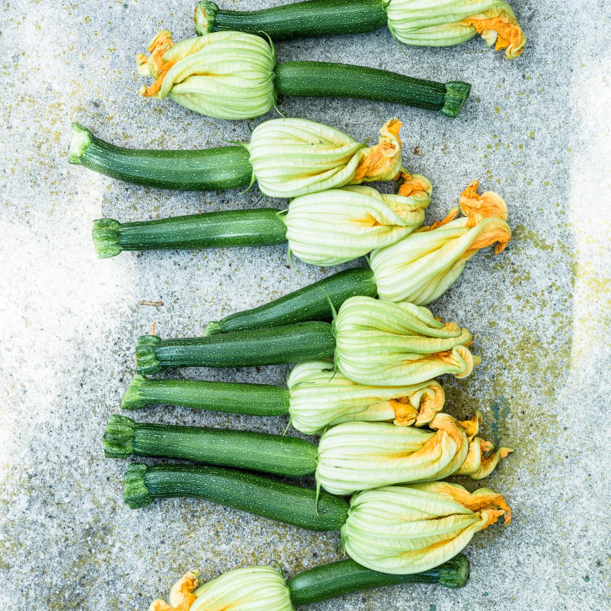 Zucchiniblüten, an denen kleine, etwa fingerlange Zucchini hängen: Das sind die weiblichen Blüten. - veggielicious | gemüse. fotos. rezepte.