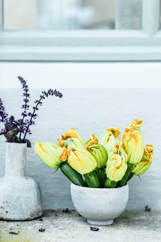 Zucchiniblüten und Basilikumblüten: Köstlich und dekorativ. - veggielicious | gemüse. fotos. rezepte.