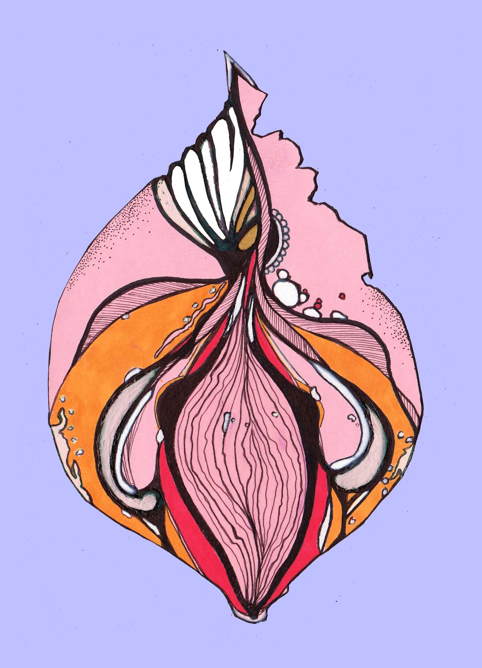 vulva 6.jpg