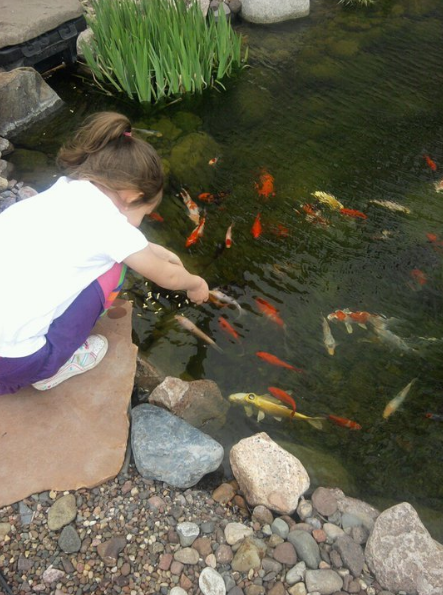 4 Reasons Why You Should Choose a Certified Aquascape Contractor to Build Your Pond in Waunakee, WI