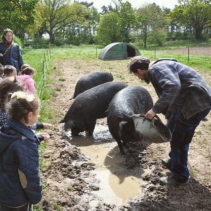 Hundred River Farm Pig Feeding