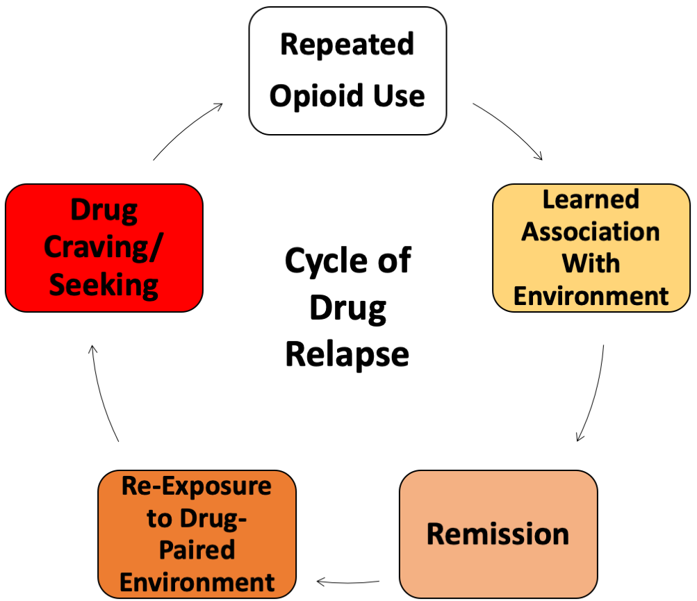 Cycle of Relapse.png