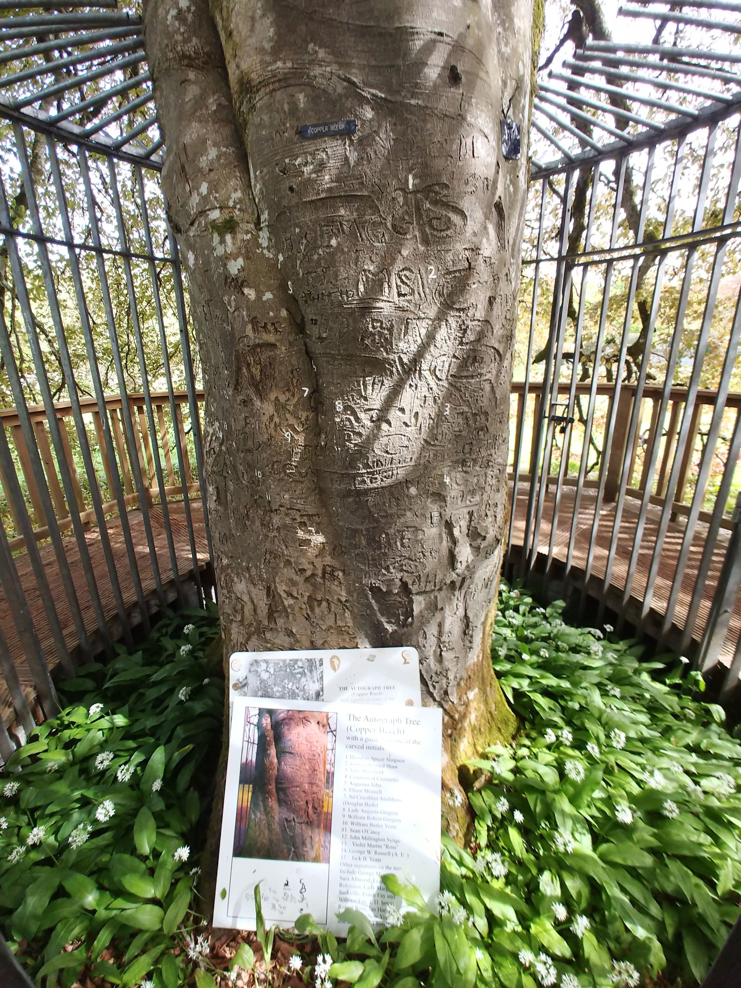 Autograph Tree, has carved initials of an array of Irish literary notables.