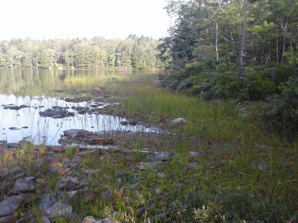 Clearwater Lake, NS is an excellent example of a typical reference lake in SW NS with ample habitat for Atlantic Coastal Plain flora.