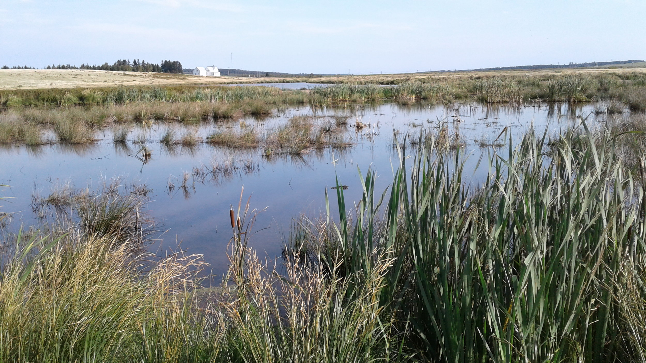Typical artificial wetland within the Cumberland Marsh Region, maritime Canada.