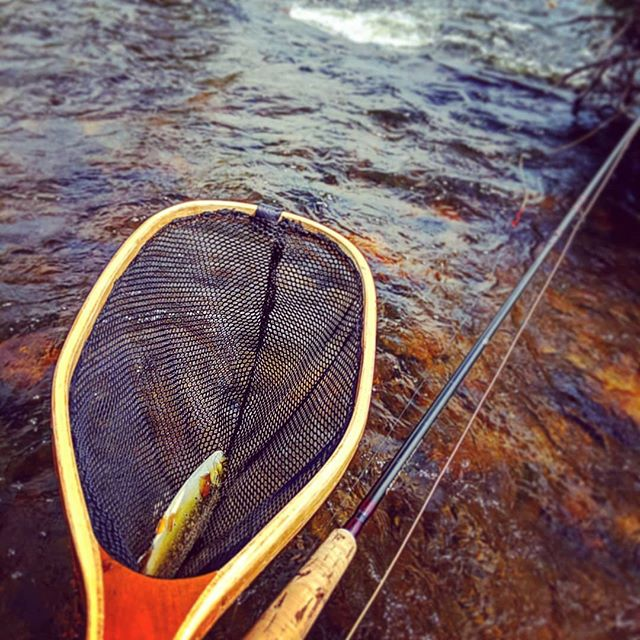 Some much needed relaxation after a grueling 4-song set at @sofardenver last night. This Colorado living can be a slog sometimes. . . . #flyfishing #sofarsoundsdenver #estespark #brookie #denver #lyons #outdoormusicians @arboranglers_lafayette