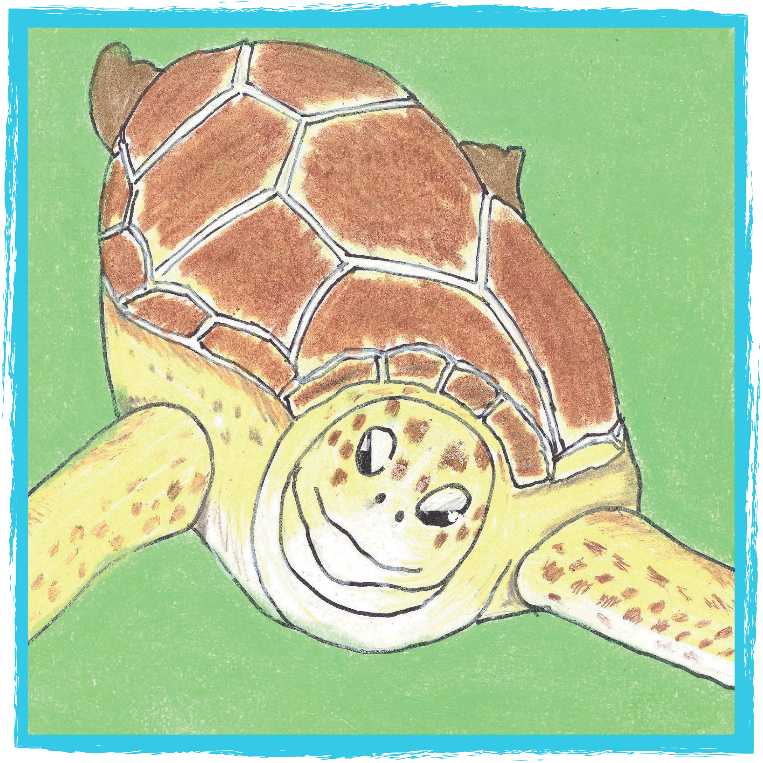 Sea Turtle, Inc. - True stories about rescued turtles at Sea Turtle, Inc., South Padre Island Texas and the people who care for them.