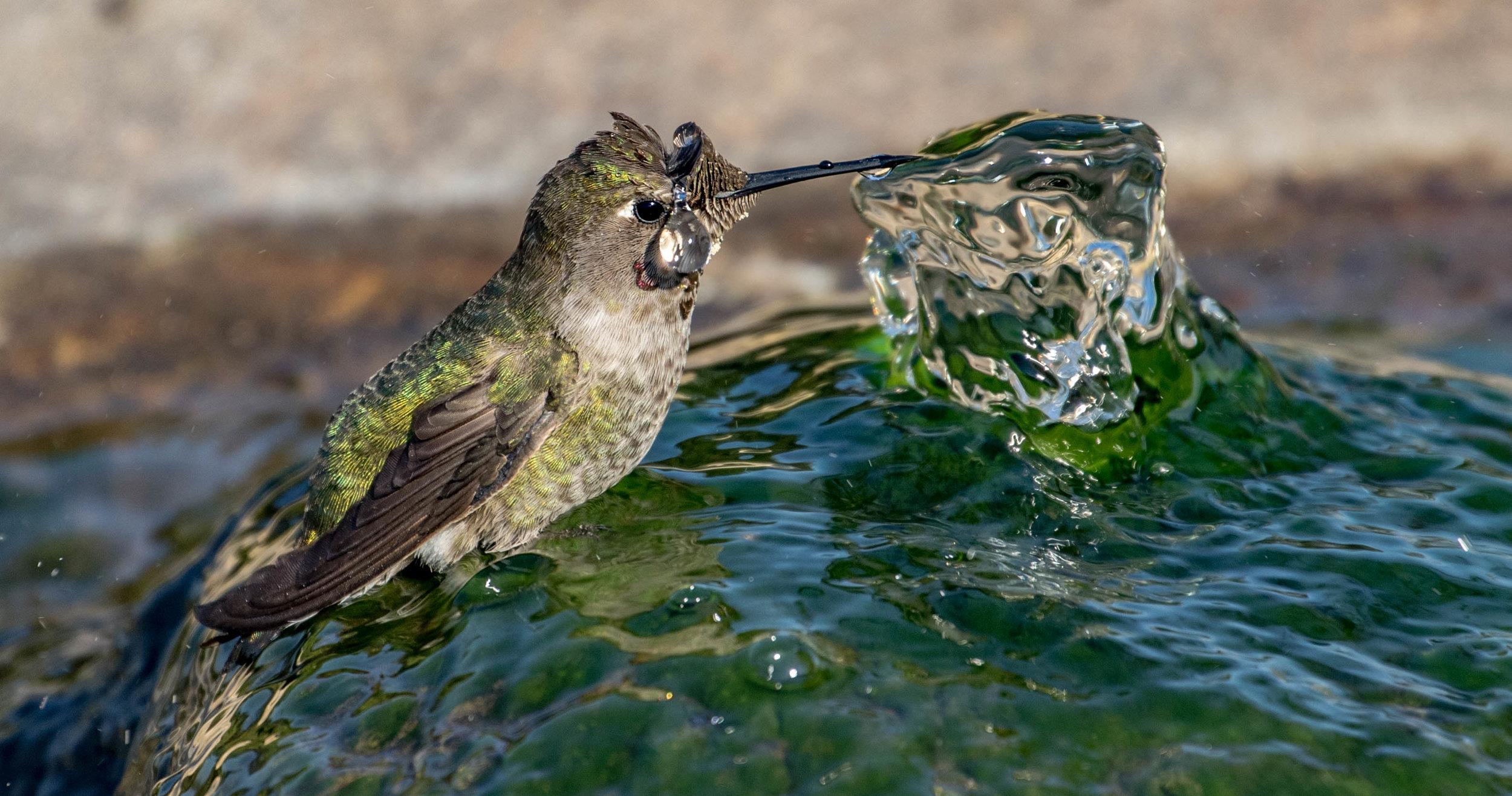 ANHU_fountain1.jpg