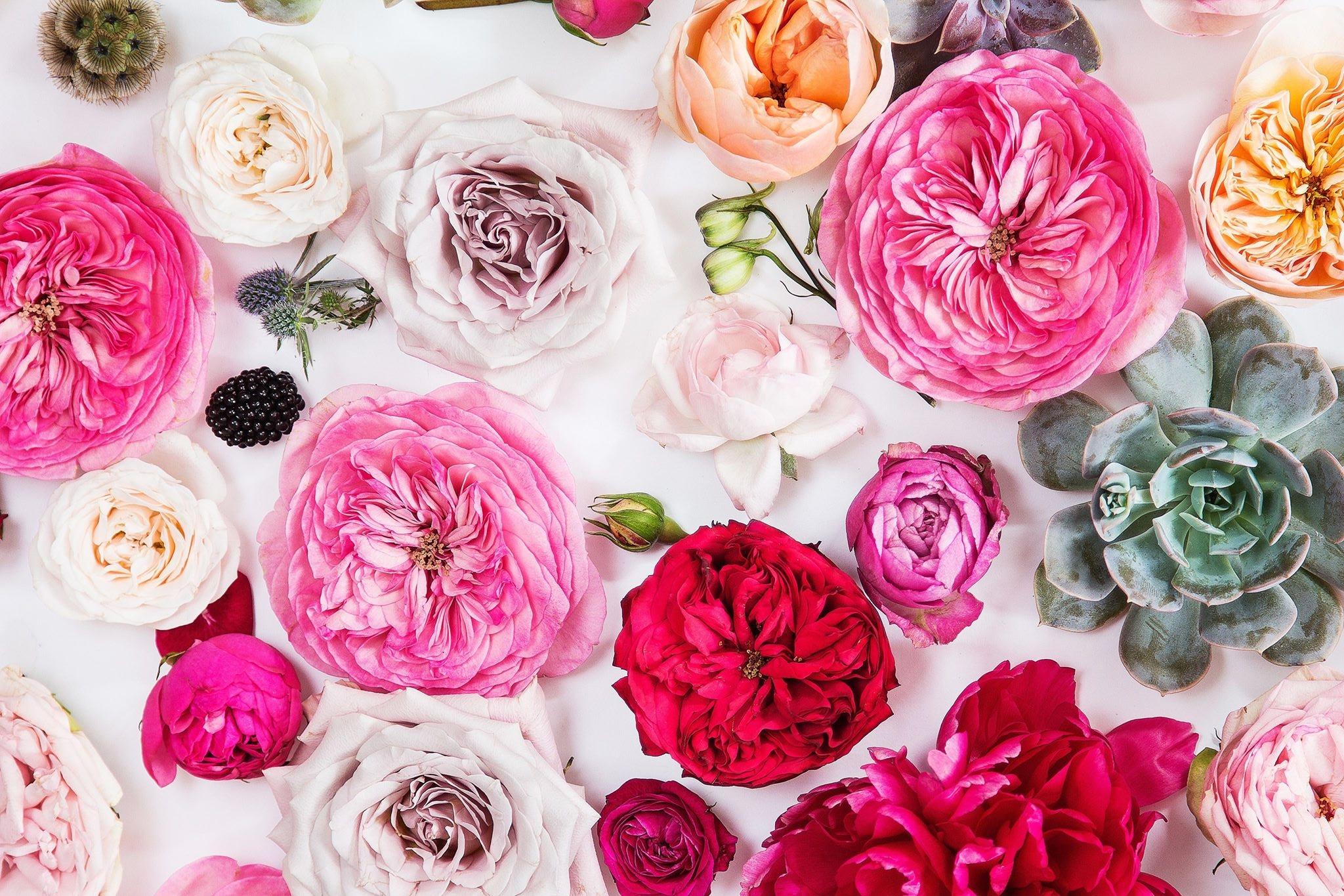 Fresh Florals -