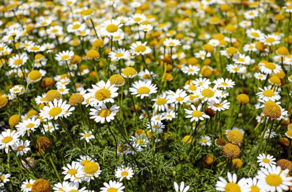 bertram-root-bloom-bloomfield-159110.jpg
