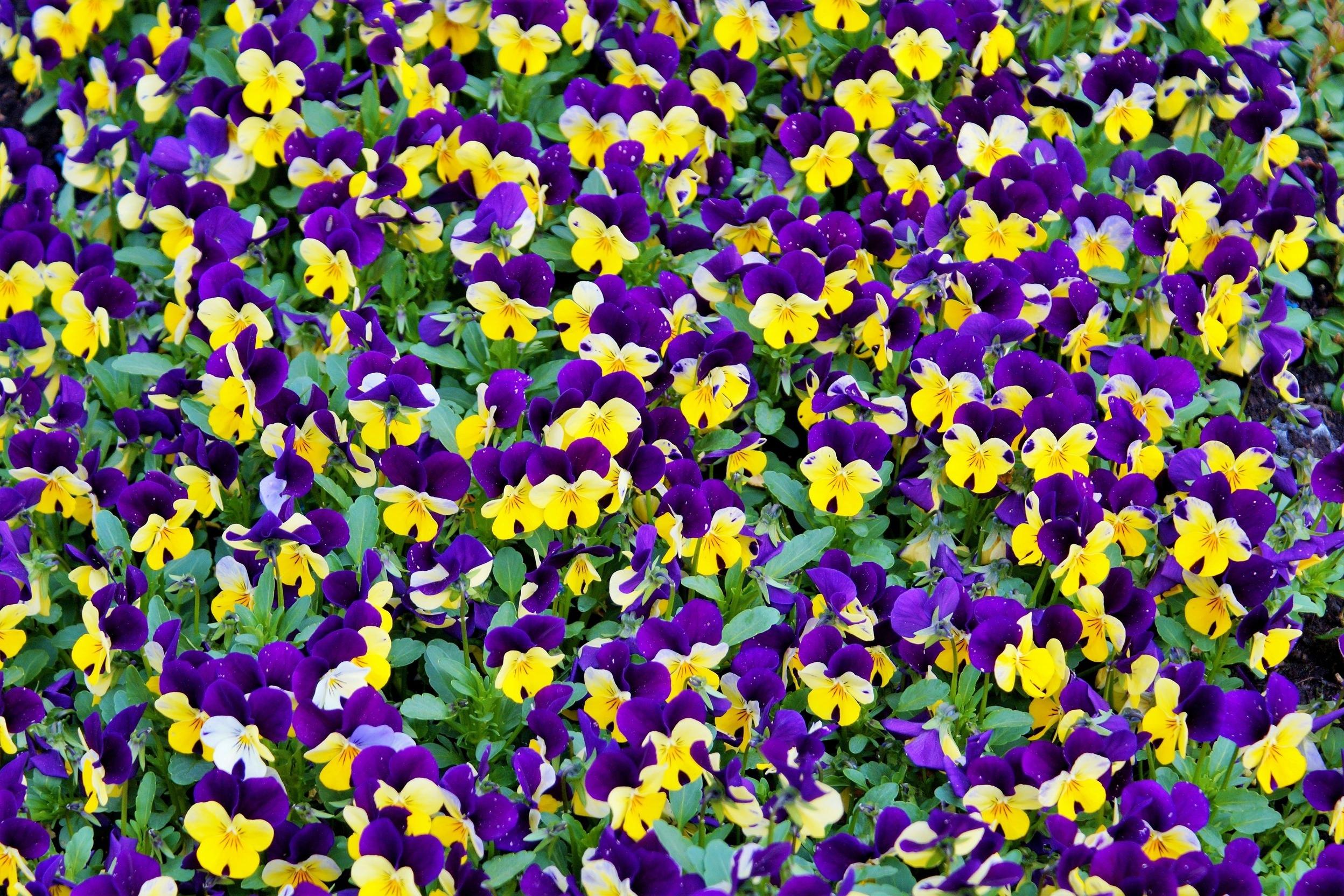 beautiful-bloom-blooming-414694.jpg