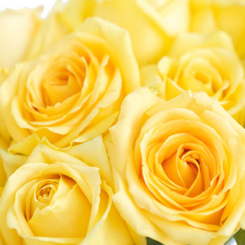 Fifty Flowers /via fiftyflowers.com