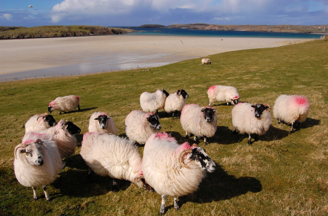 Crofting Tour   If you love animals and want to experience authentic island life, then this is the tour for you! You will be immersed in island culture, helping on the land and learning as you go. A treat for real culture-vultures!