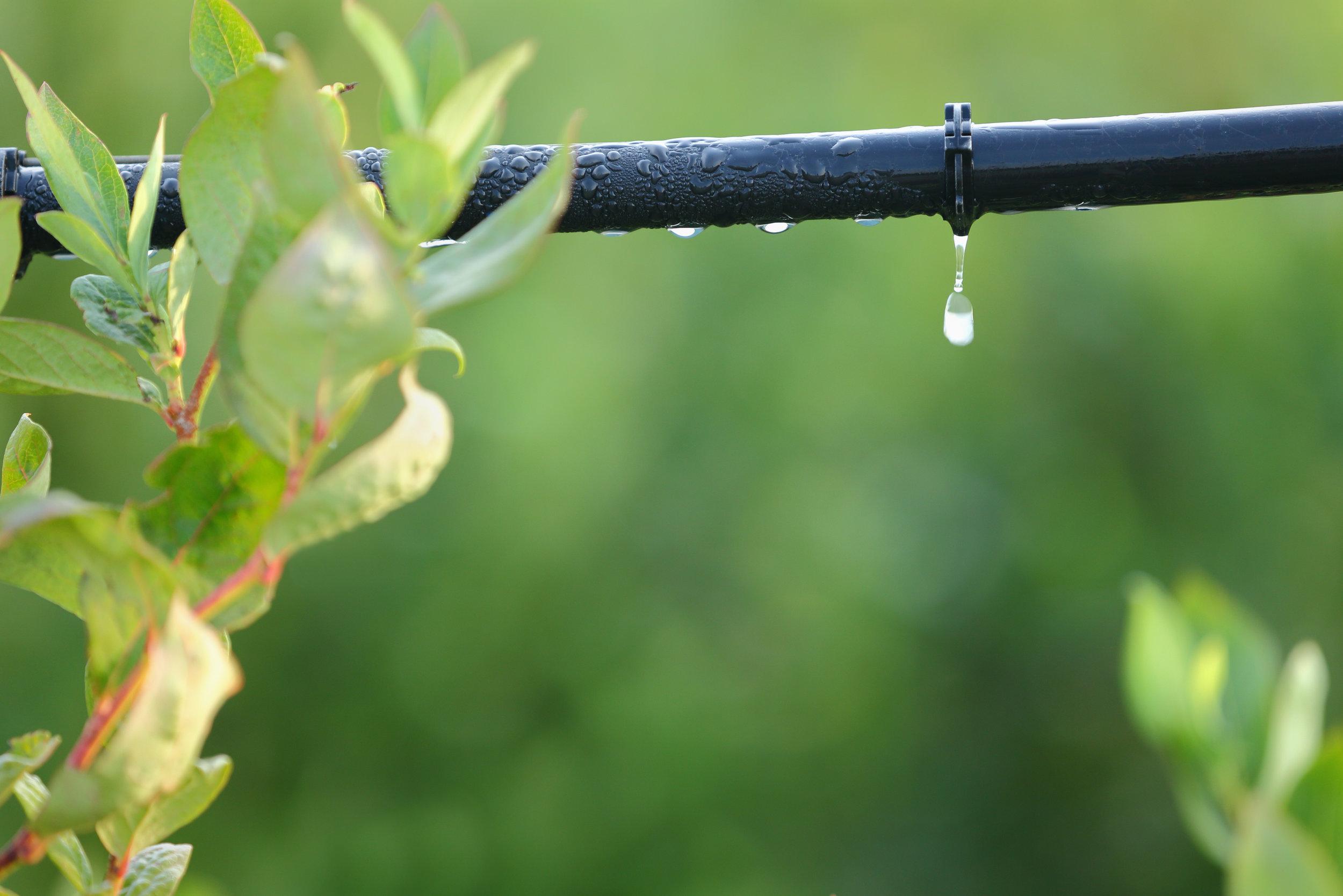 Family Drip Irrigation Malawi Crop Irrigation