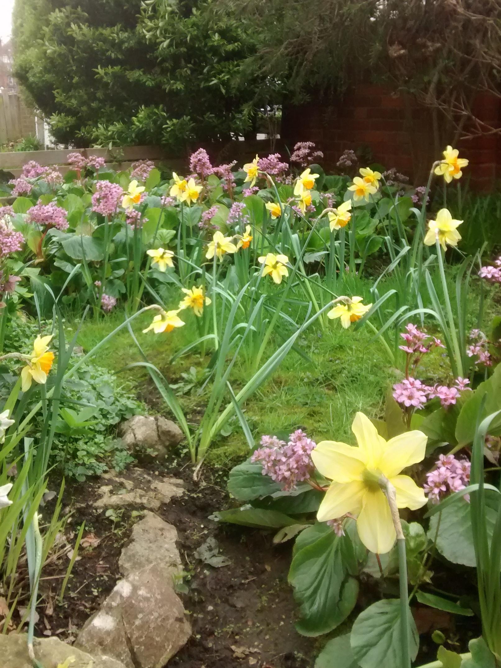 L'esempio dei Narcisi - Sono tra i primi fiori ad annunciare la primavera. Un improvvisa esplosione di colore. Richiedono poche cure ma devono essere piantati a Novembre.