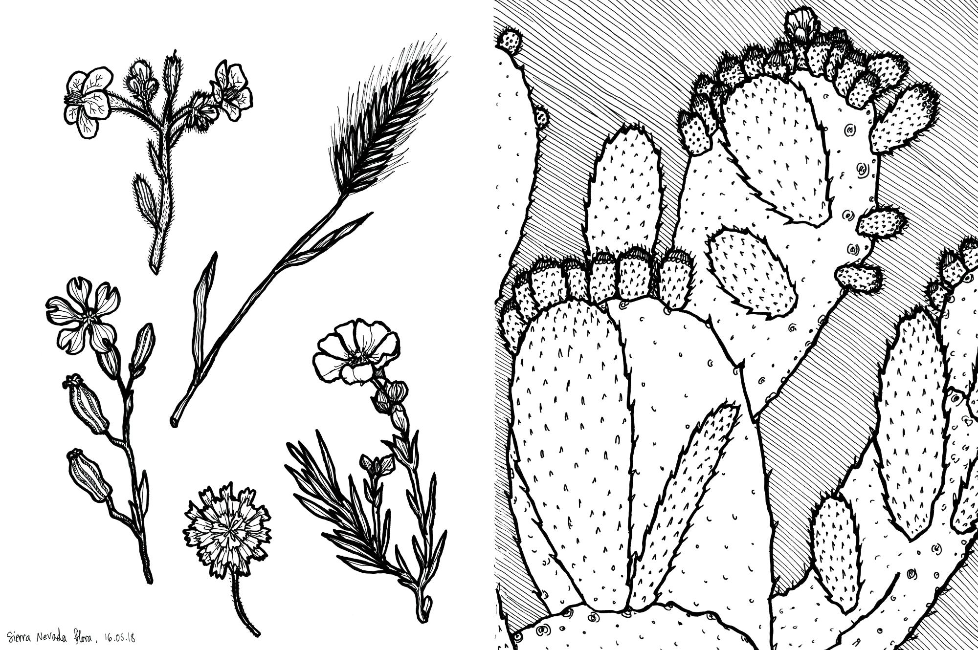 24_granada_flora_cactus_web.jpg
