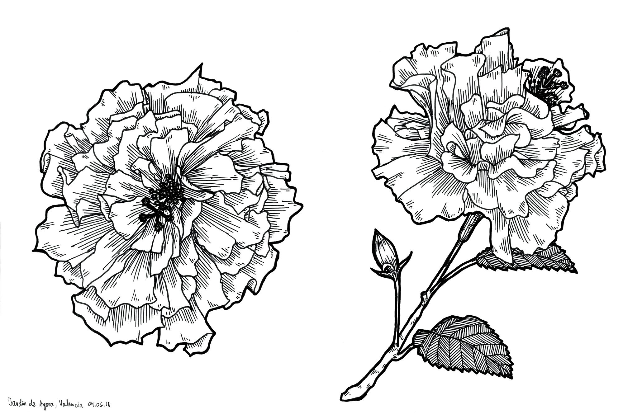 34_valencia_flowers_web.jpg