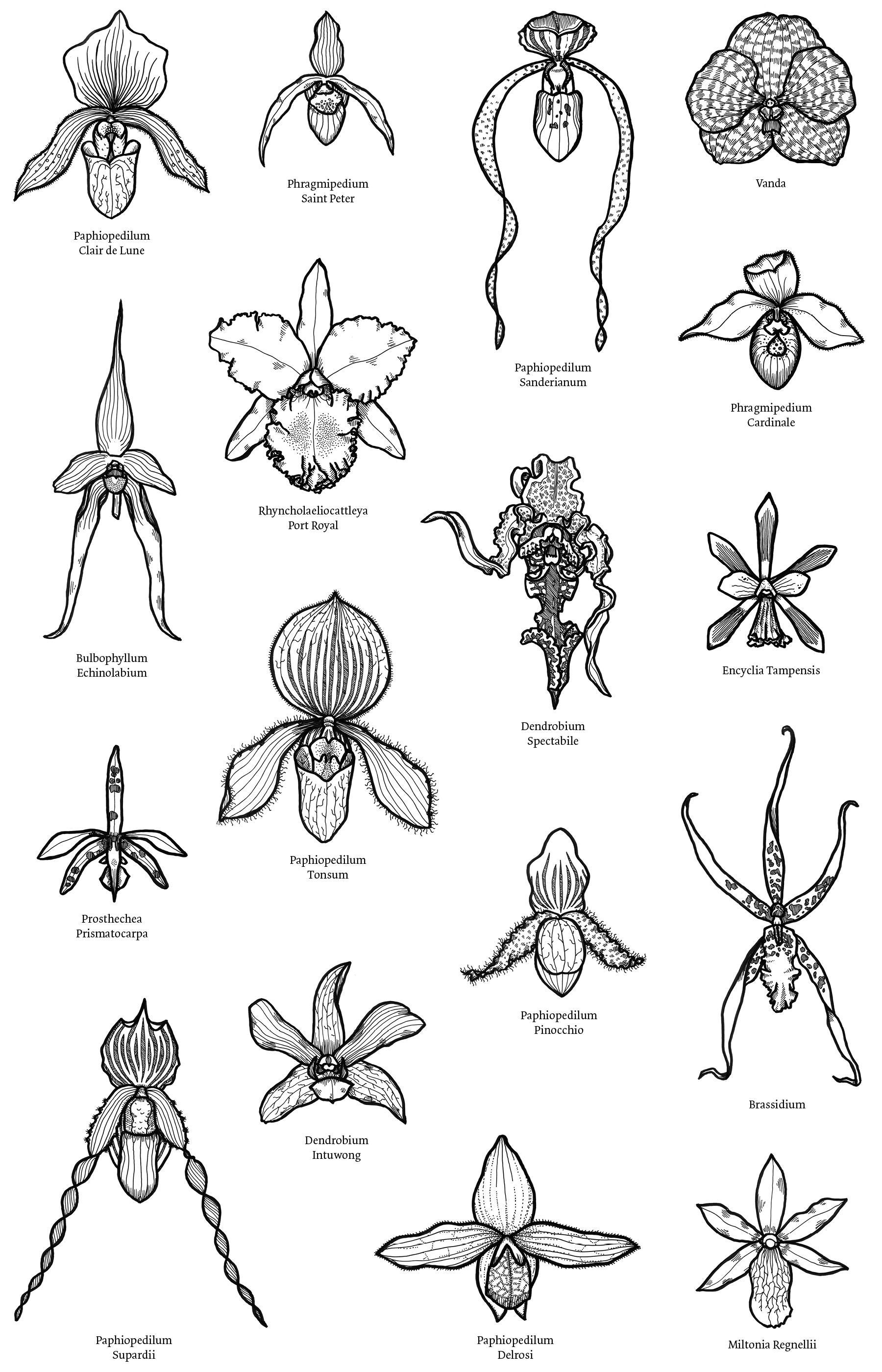 stillonoir-orchids.jpg