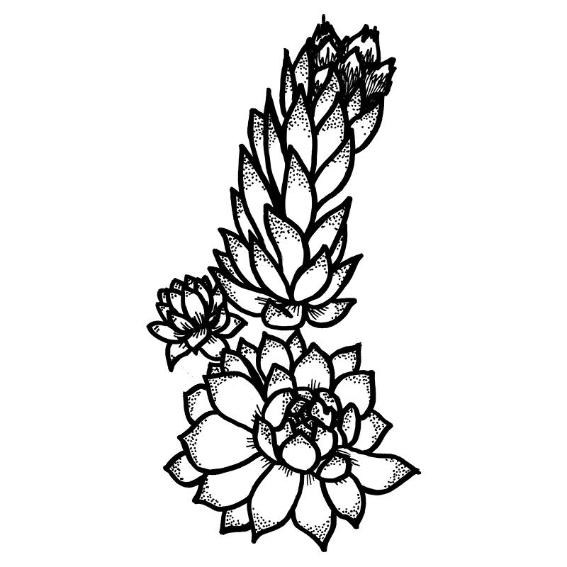 alpine-flora_individual-flowers2.jpg