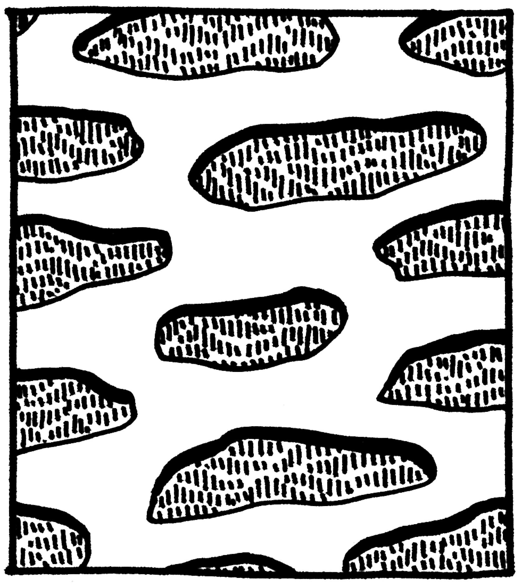 Valencia_patterns3.jpg