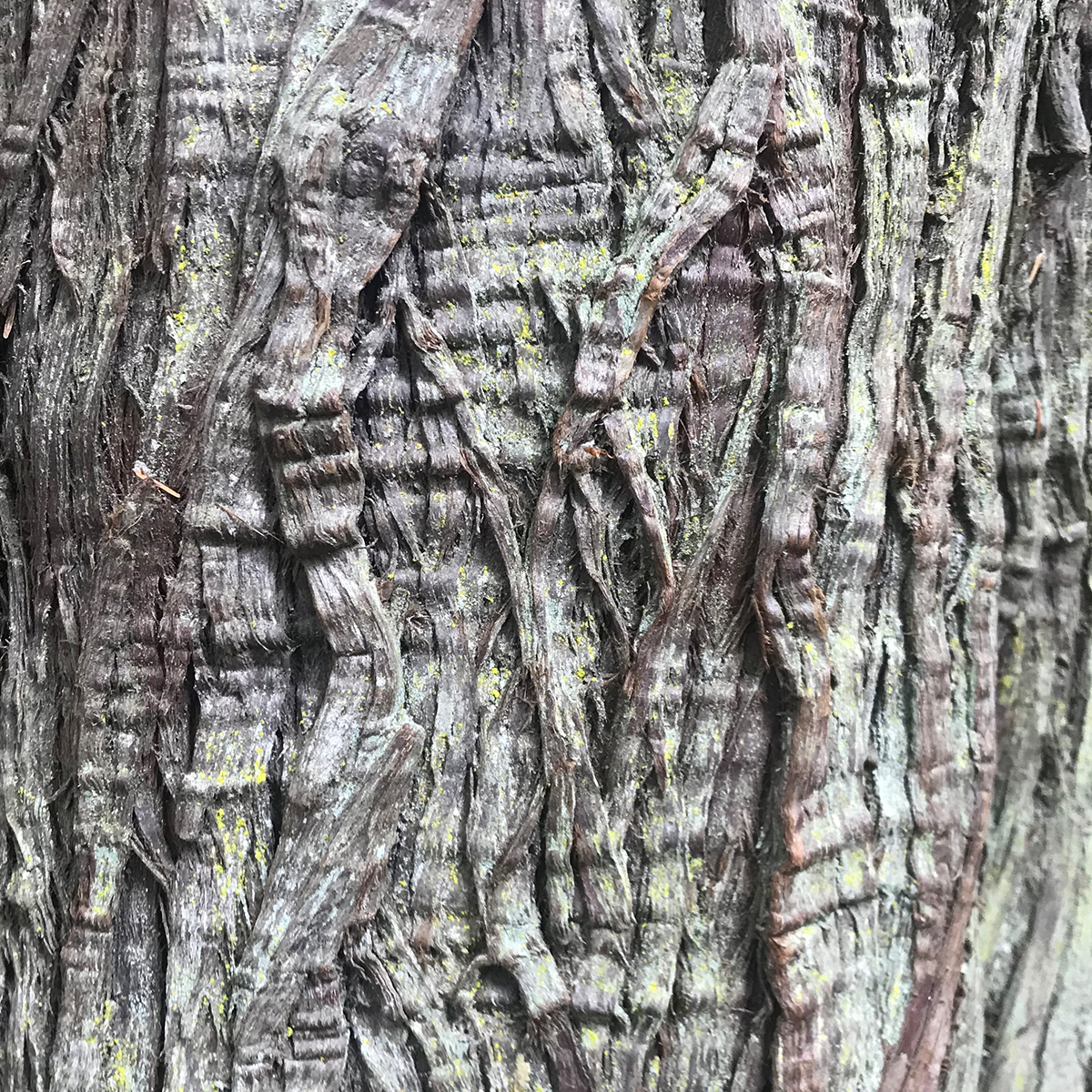 stillonoir_bellevue-triptych_reference-bark