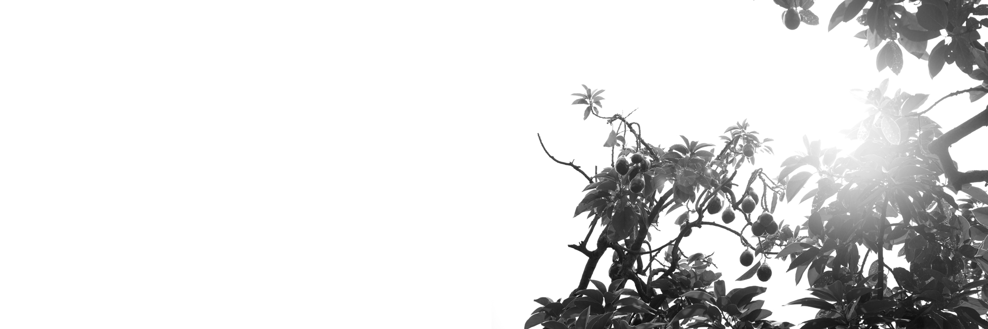 Sol_002_Aura011.jpg