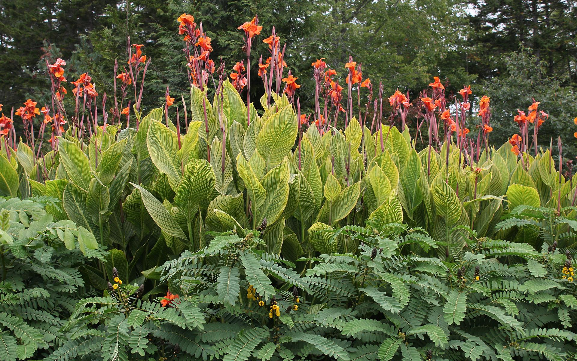 Botanical-Garden_IMG_7255-(1).jpg