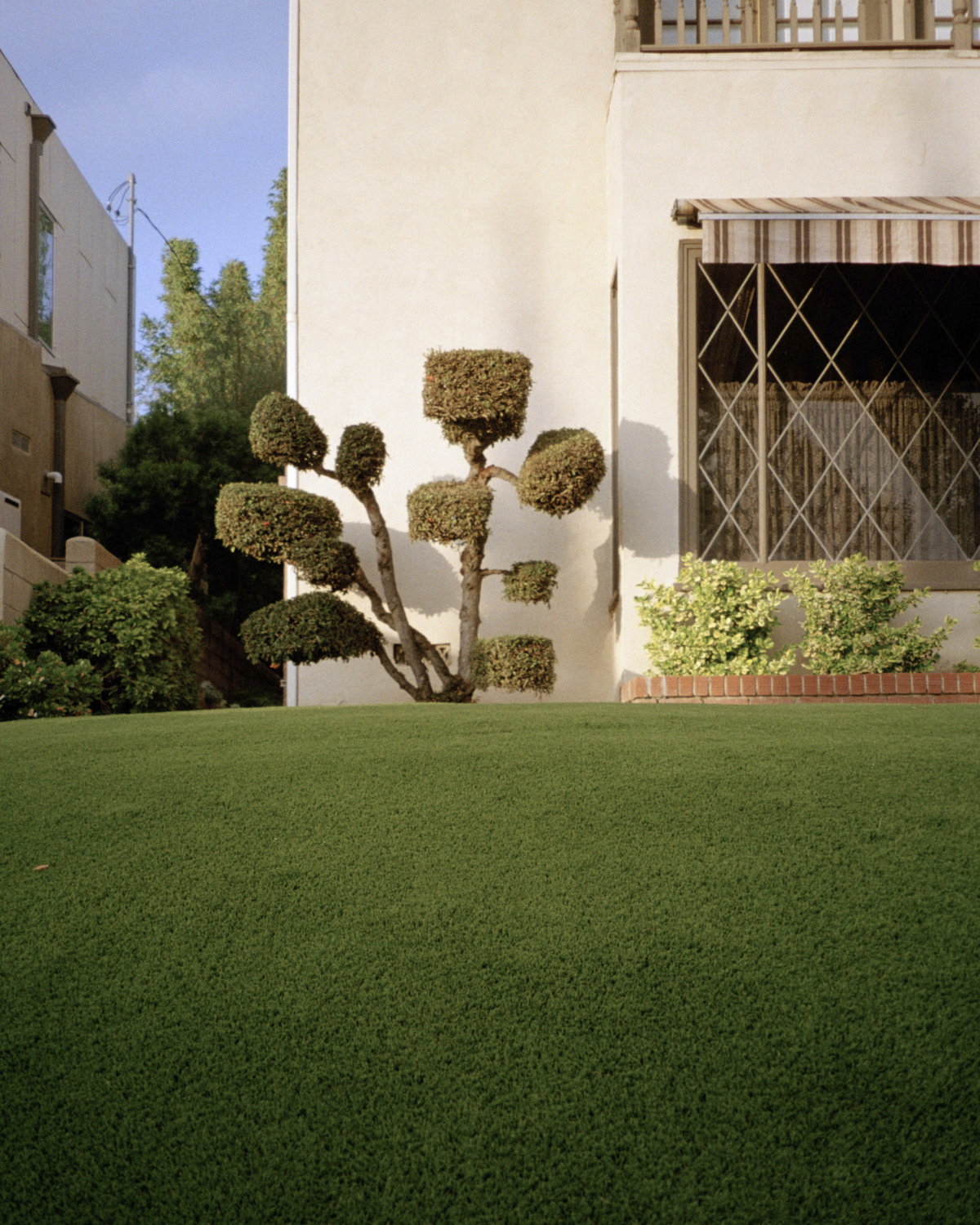 Untitled (Topiary) - © Anna Brody