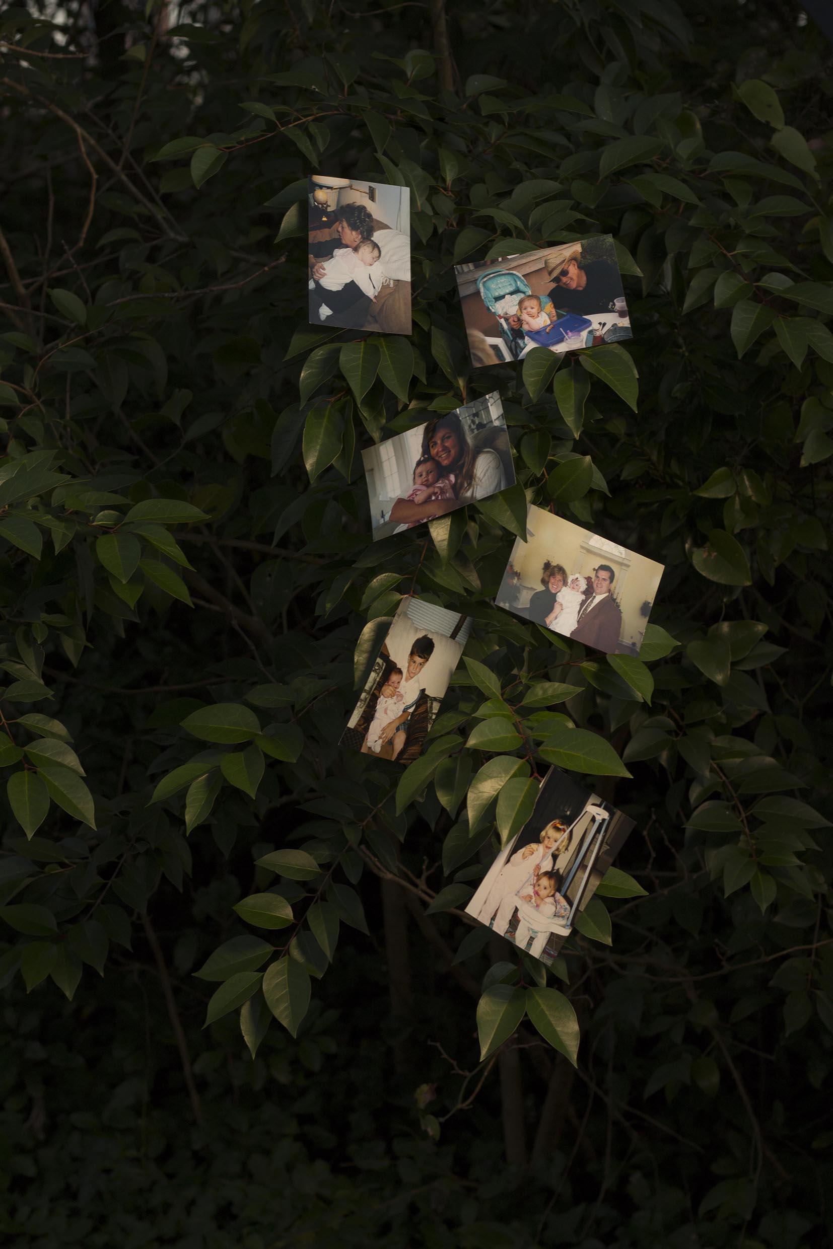 Family Tree, 2019 - © Alyssa Thorn