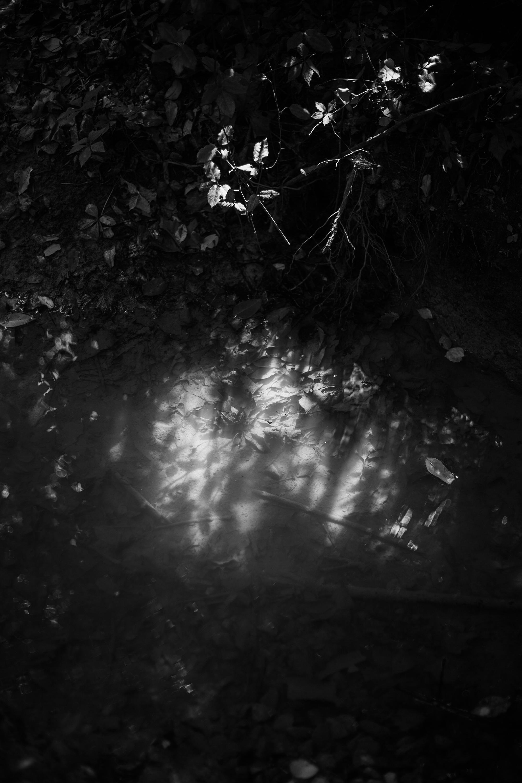 © Brennan Booker