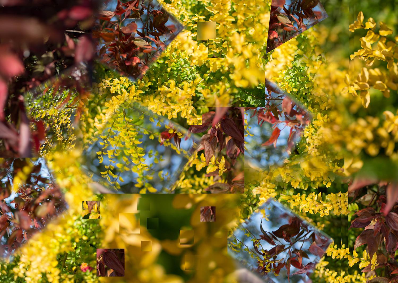 Garden Glitch, Michala Stewart