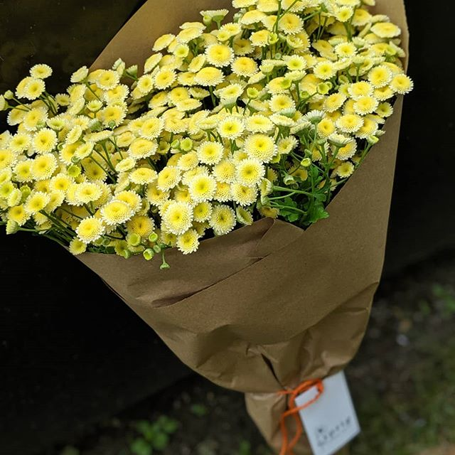 Sweet and simple.  This gorgeous bounty of @andersonacresfarm Feverfew went off to a photoshoot today.  Sprig Flower Truck delivers farm fresh flowers right to your door - DM or message us through our website (link in bio) for your next flower delivery.  Did you know that the #SprigRig is also available for photo shoots and events. Check out our website for more info. ••• #flowertruck #westchester #westchesterny #WestchesterCounty #rivertowns #irvington #newrochelle #hastings #dobbsferry #larchmont #scarsdale #bronxville #yonkers #farmtotable #farmfresh #fieldtovase #slowflowers #locallygrown #shoplocal #shopsmall #womanowned #treatyourself