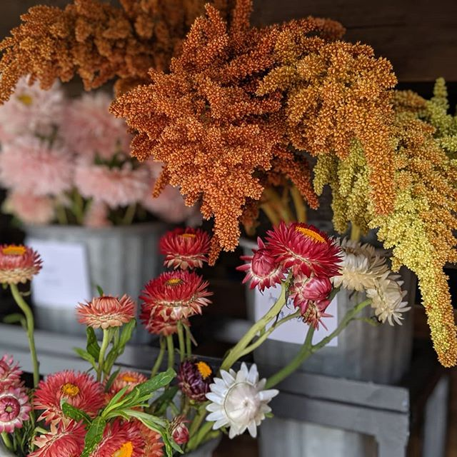 Fall feels on the #SprigRig this week. This perfect #newyork weather and these autumn colors have got us gearing up for the fall season. Visit us at the truck this week to bring some early fall blooms home: @scarsdalefarmersmarket Thursday 9/5, 10-2 @downtoearthmkts at the Thomas Paine Cottage in New Rochelle Friday 9/6, 9-2 @newrochellefarmersmarket Library Green Saturday 9/7, 9-2 @irvingtonfarmersmarket Sunday 9/8, 9-1:30 ••• #flowertruck #westchester #westchesterny #WestchesterCounty #rivertowns #irvington #newrochelle #hastings #dobbsferry #larchmont #scarsdale #bronxville #yonkers #farmtotable #farmfresh #fieldtovase #slowflowers #locallygrown#shoplocal #shopsmall #womanowned #treatyourself