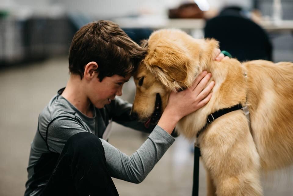 dotc grants doggies on the catwalk