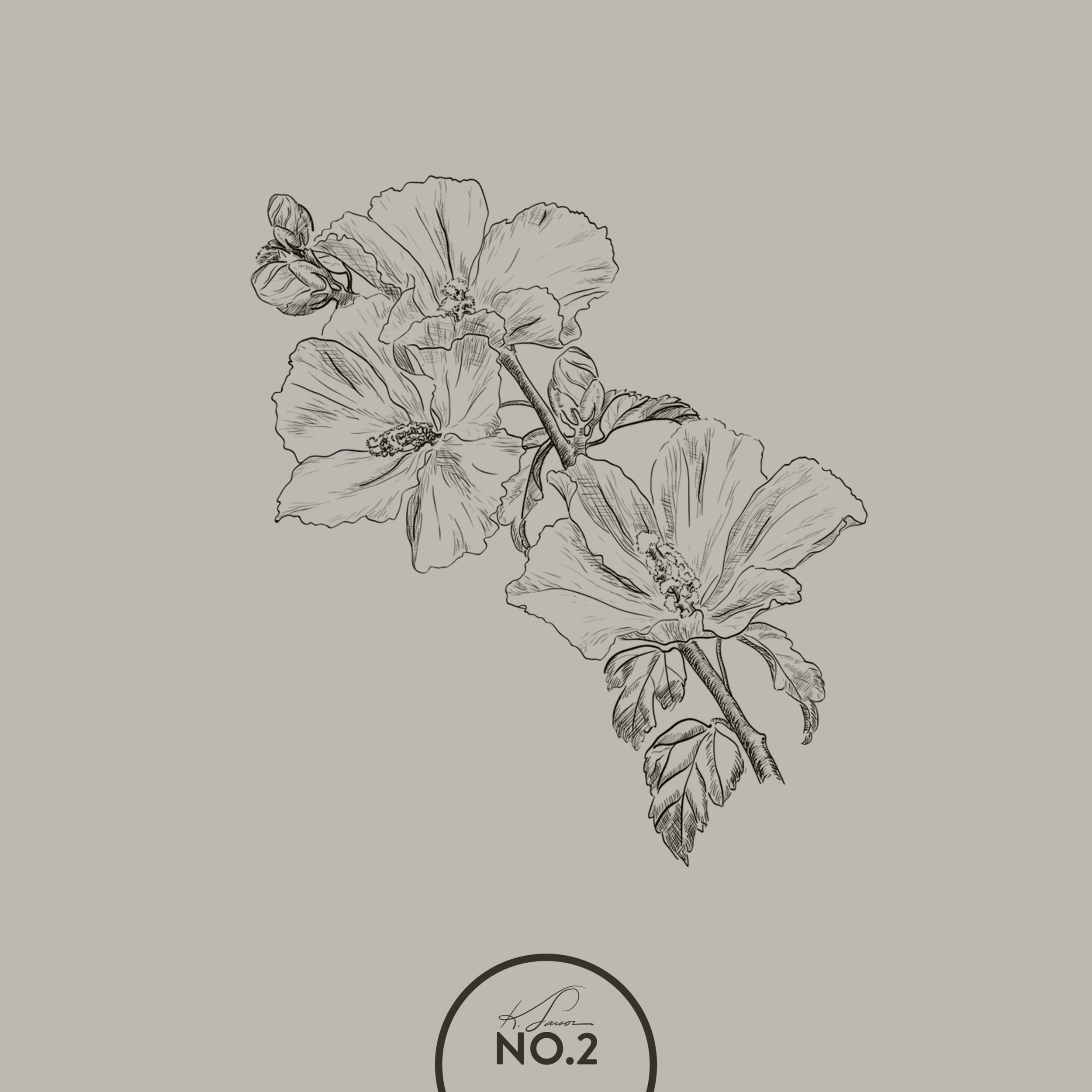 hand-drawn-hibiscus-flower-sketch-vector-8507635.png