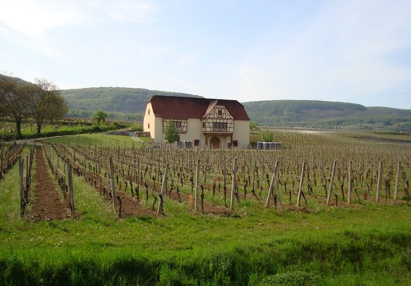 Domaine Moltès - Pfaffenheim //  Wine Map of France>  //  Wine Map of Alsace>