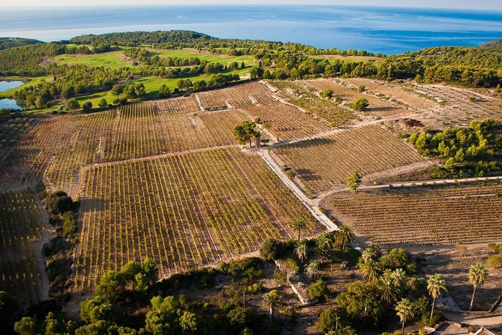 Domaine de Frégate - Bandol //  Wine Map of France>  //  Wine Map of Provence>