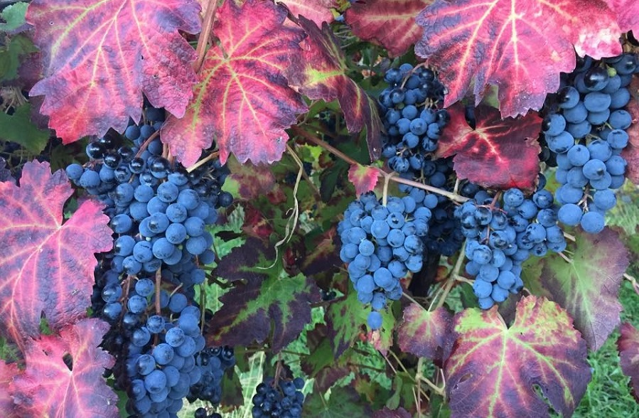 Bruno Zanazi - Emilia Romagna //  Wine Map of Italy>  //  Wine Map of Emilia-Romagna>