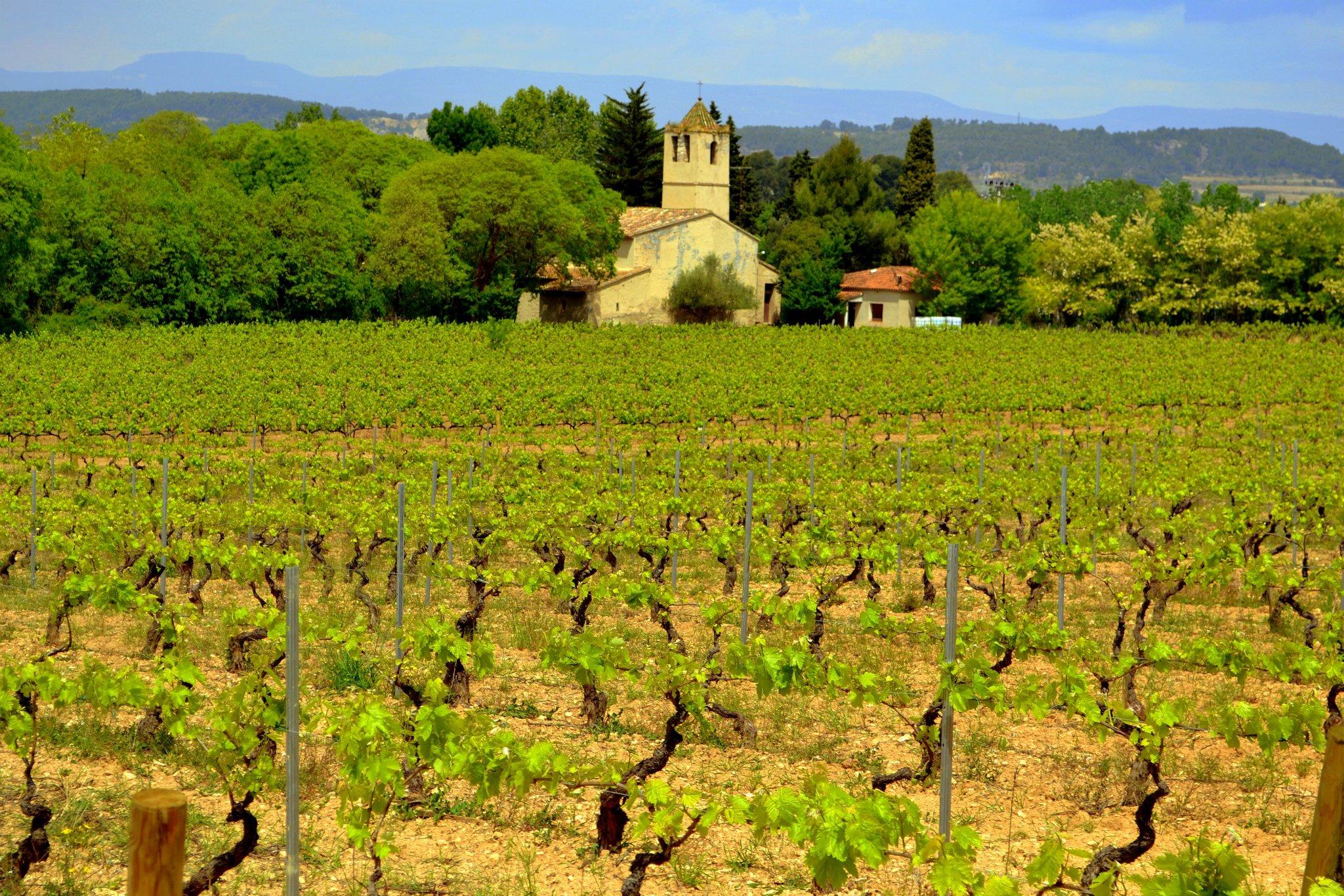Bodegas Maset - Penedès (Catalunya) //  Wine Map of Spain>