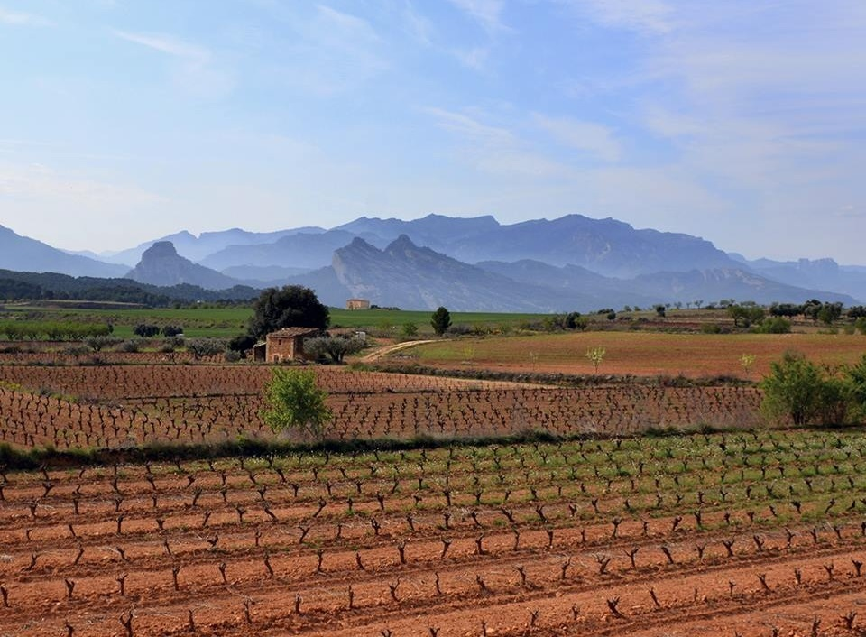 Bodegas Maset - Priorat (Catalunya) //  Wine Map of Spain>