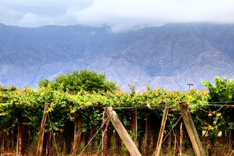 Valle de La Puerta - La Rioja //  Wine Map of South America>